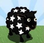 stars sheep