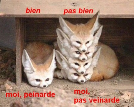 tas de renards